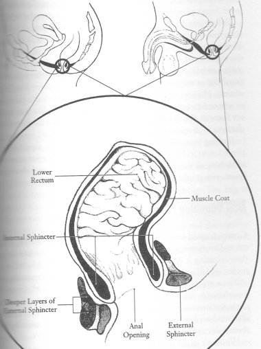 anus draw