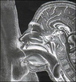 deep-throat x-ray
